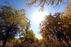 #Clima: il riscaldamento globale ritarderà la prossima era glaciale di 50.000 anni.   #globalwarming #pianetaterra #terra #ambiente #natura #eraglaciale #scienza #riscaldamentoglobale #meteoweb