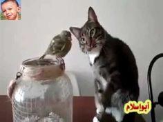 القط يمسح علي جسم عصفور بهدوء خوفا من جرحه كما لو كان ابنه