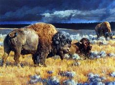 As the storm takes over the sky over the pasture, the bison lay RESTLESS together in this Nancy Glazier print. This print is available in an unframed image size of art Wildlife Paintings, Wildlife Art, Animal Paintings, Buffalo S, Buffalo Animal, American Bison, Native American Art, Buffalo Painting, Animal Totems