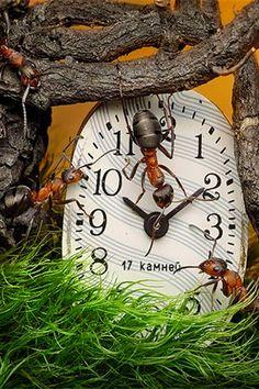Fotógrafo usa formigas para criar contos de fadas
