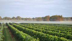Weekend Getaways to North Fork, Long Island from New York | Fodor's
