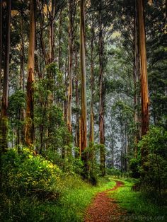 ✧ Mesmerizing Nature ✧ - silvaris: Enchanted Forest by Margaret Netherwood Forest Path, Tree Forest, Haunted Forest, Forest Decor, Forest Trail, Beautiful World, Beautiful Places, Beautiful Forest, Parks