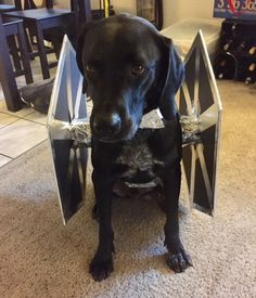 dog tie fighter star wars halloween costume blacklab bluetickcoonhound halloween costume - Halloween Costumes For Labradors