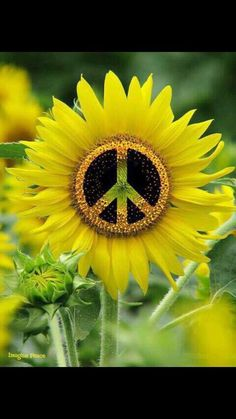 Flower with a peace sign design in middle art Hippie Peace, Hippie Love, Hippie Chick, Hippie Art, Hippie Style, Peace Sign Art, Peace Signs, Peace Fingers, Give Peace A Chance