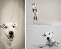 Ellen Shershow Peña - amazing pet photographer.