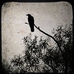 ONE crow sorrow,  Two crows joy,  Three crows a letter,  Four crows a boy,  Five crows silver,  Six crows gold,  Seven crow a story yet to be told.