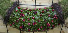 guirlande maken als kerststuk om omhoog te hangen - decoratieve guirlandem met hooi als mooi bloemstuk