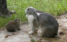 Κουνελάκια ,αγροτουριστική Φάρμα, Φάρμα ζώων, Ράντζο πόνυ Rabbit, Animals, Bunny, Rabbits, Animales, Animaux, Bunnies, Animal, Animais