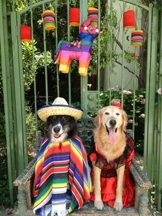 @kbkim Cinco de Mayo may have passed, but Halloween is right around the corner.
