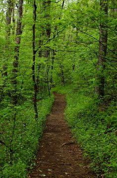 Appalachian Trail....I remember hiking and camping on this as a child with my parents! They were so Adventurous!!!!