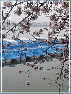 See the monuments from the vantage point of the tidal basin in a paddle boat rental mi from conference hotel) Great Places, Places To See, Things To Do Inside, Washing Dc, Jefferson Memorial, Washington Dc Travel, Paddle Boat, Summer Romance