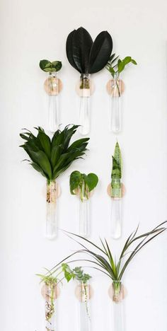 The plant obsession is taking over my life- and I'm SO HAPPY ABOUT IT! Today's DIY project is a modern propagation planter! Plant Wall Decor, House Plants Decor, Hanging Plant Wall, Flower Wall Backdrop, Wall Backdrops, Backdrop Wedding, Test Tube Crafts, Decoration Plante, Diy Planters
