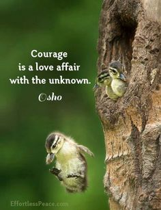 Courage is a love affair with the unknown ~~~❤~~~ osho ❤