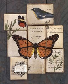 Wild Apple Studio - Birds and Butterflies II - art prints and posters