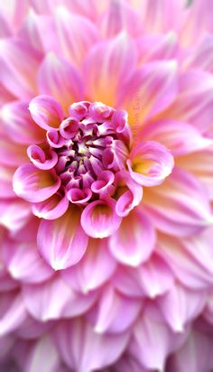 ~~You Color My World | pink dahlia macro | by Robin Evans~~