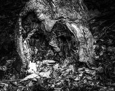 8x10 Black and White Print Faces In Trees Series  2 by PelliculArt