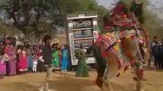 Camel Dance Mind Blowing Must Watch