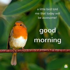 Good Morning. A little bird told me that today will be awesome!