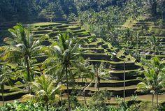 Penetapan besaran pajak bagi lahan pertanian diusulkan untuk dikaji ulang. Penetapan pajak bagi lahan pertanian diusulkan tidak…