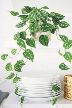 Decore com Plantas!