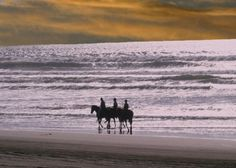 View our list of Beach Horse Riding operators in KwaZulu-Natal, South Africa - Dirty Boots Beach Adventure, Adventure Tours, Beach Rides, Wetland Park, Shark Diving, Beach Posters, Ocean Sounds, Kwazulu Natal, Adventure Activities