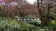 原谷苑(京都)の春の庭園風景:Spring scenery of the Haradani-en (Kyoto, Japan)