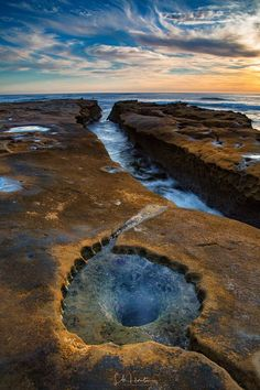 """This is """"Fall Leaves"""", San Diego style ! Taken at Hospital Reef in La Jolla, CA at the tide pools."""