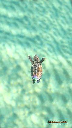 If you like turtles, baby turtles or tortoise than check out these funny turtle videos and cute turtle videos. Baby Sea Turtles, Cute Turtles, Tier Wallpaper, Animal Wallpaper, Sea Turtle Wallpaper, Baby Wallpaper, Cat Phone Wallpaper, Unique Iphone Wallpaper, Ocean Wallpaper