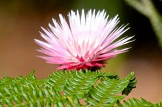 Glorious Wild Flowers of the Fynbos Wild Flowers, Beautiful Flowers, Plants, Pink, Pretty Flowers, Flora, Plant, Pink Hair, Planting