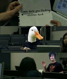 the Rev and the stallion duck