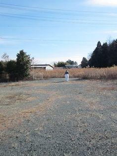 Fukushima Dying....