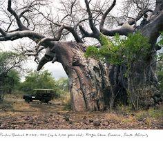 Los organismos vivos más viejos del mundo