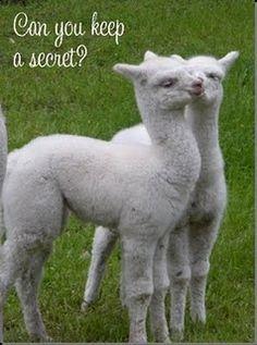 yarn shop that creates one of a kind handmade yarns from raised alpacas and angora bunnies