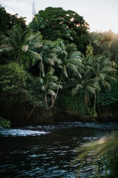 Big Island, Hawaii / Instagram @hbgoodie / ourgoodadventure.com / travel wanderlust inspo / tropical island photography / adventure hiking / coconut trees