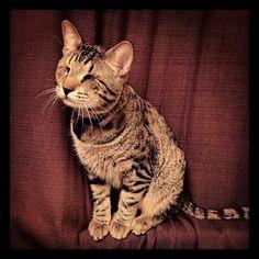 Oskar the blind cat