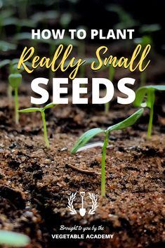We start seeds indoors for our vegetable garden every year, and planting itty bitty seeds used to be a tedious task, but with this trick we can now quickly plant one seed a time with ease. Starting Vegetable Seeds, Starting Plants From Seeds, Seed Starting, Vegetable Gardening, Organic Gardening, Gardening Tips, Herb Seeds, Garden Seeds, Growing Vegetables
