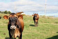 Incontournables Le Havre, Cow, Articles, Architecture, Animals, Madeleine, Travel, Arquitetura, Animales