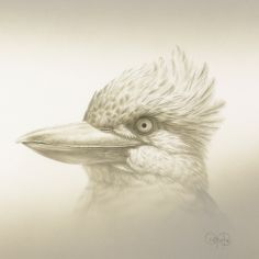 """""""Blue-winged Kookaburra Study"""" - artwork by Christopher Pope - now available as fine art reproductions - http://www.artreproductions.com.au/gallery.php?artid=2549"""