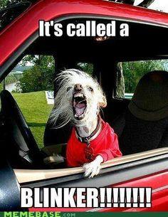 I may look like this during my sliiiiiight cases of road rage. Maybe.