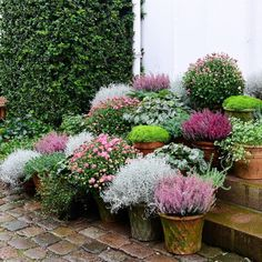 I'm now taking the last pictures for my new book about pot arrangements. What do you think? Potted Plants Patio, Garden Planters, Container Plants, Container Gardening, Back Gardens, Outdoor Gardens, Pot Jardin, Dream Garden, Garden Inspiration
