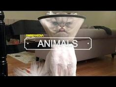Funny Cat Fails Compilation | Top 10 Funniest Cat Videos Weekly | by TreeMedia 2016 - http://positivelifemagazine.com/funny-cat-fails-compilation-top-10-funniest-cat-videos-weekly-by-treemedia-2016/ http://img.youtube.com/vi/M48KLdqS6P4/0.jpg  Funny Cat Fails Compilation | Top 10 Funniest Cat Videos Weekly | by TreeMedia 2016 SUBSCRIBE TreeMedia ANIMALS: ➪http://bit.ly/2fDE3UA Subscribe … ***Get your free domain and free site builder*** Click to Surprise me! Please