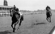 Roberto wins the Benson and Hedges Cup at York, handing Brigadier Gerard his only loss.