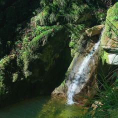A beautiful little waterfall in the #Twannschlucht this morning. The Jura region of Switzerland is full of these beautiful little surprises. #forest #gorge #water #waterfall #moss #InLoveWithSwitzerland #Jura3Lacs #Twann @jura3lacs