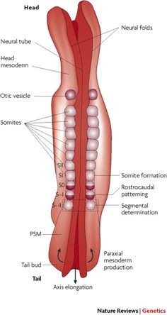 synovial membrane MCP joint - Google Search | Art inspiration ...