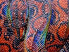 Conheça 9 espécies exóticas e belíssimas de cobras e serpentes