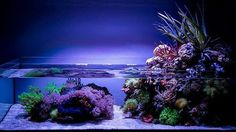 #aquaria #aquarium #beautiful #coral #fish #fishtank #freshwater #igers…