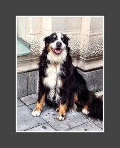 Lovely dog from #Stockholm