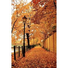 Theglossiernerd.tumblr.com ❤ liked on Polyvore featuring backgrounds, fall, pictures, photos and fillers