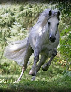 All power & grace in this fine steed. Gosia Makosa #horse http://www.annabelchaffer.com/categories/Equestrian-Gifts/