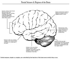 Partial seizures, simple or complex, are controlled by the function of the brain area in which they occur. #brain #epilepsy